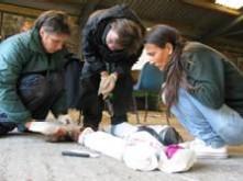 Students studying anatomy