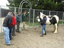 Students studying equine behaviour