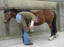 A student working with a horse